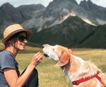 trentino con il cane