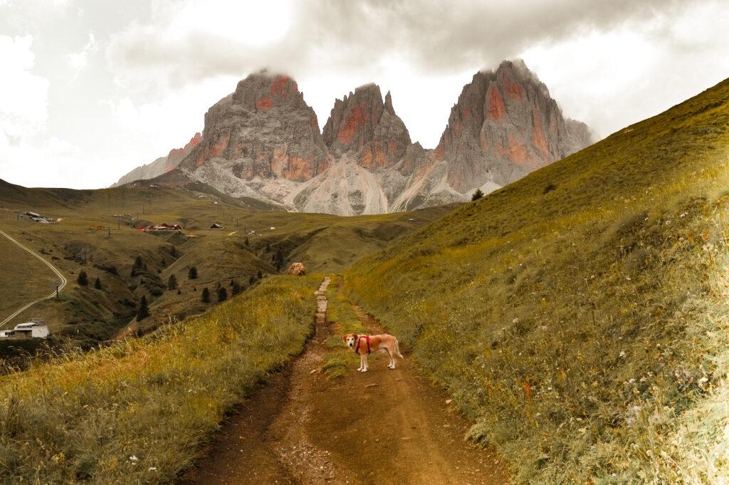 trentino trekking passo sella