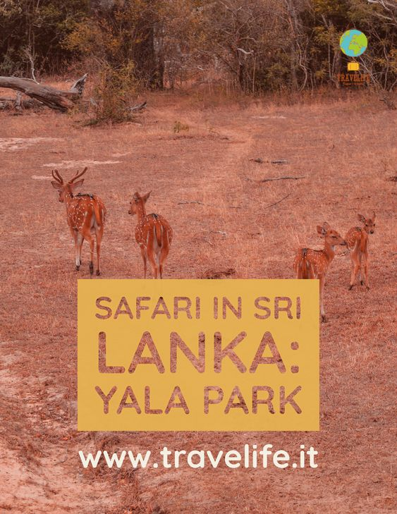 SAFARI SRI LANKA
